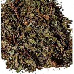 Morning Dreams, green tea
